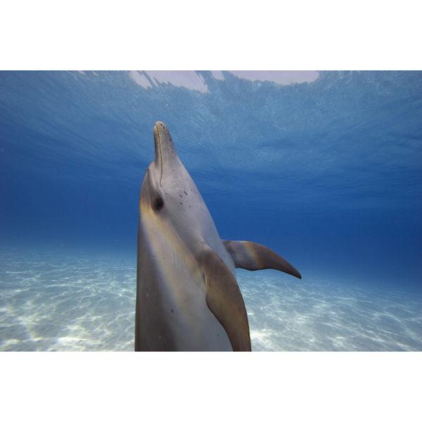 Double Rainbow Dolphin
